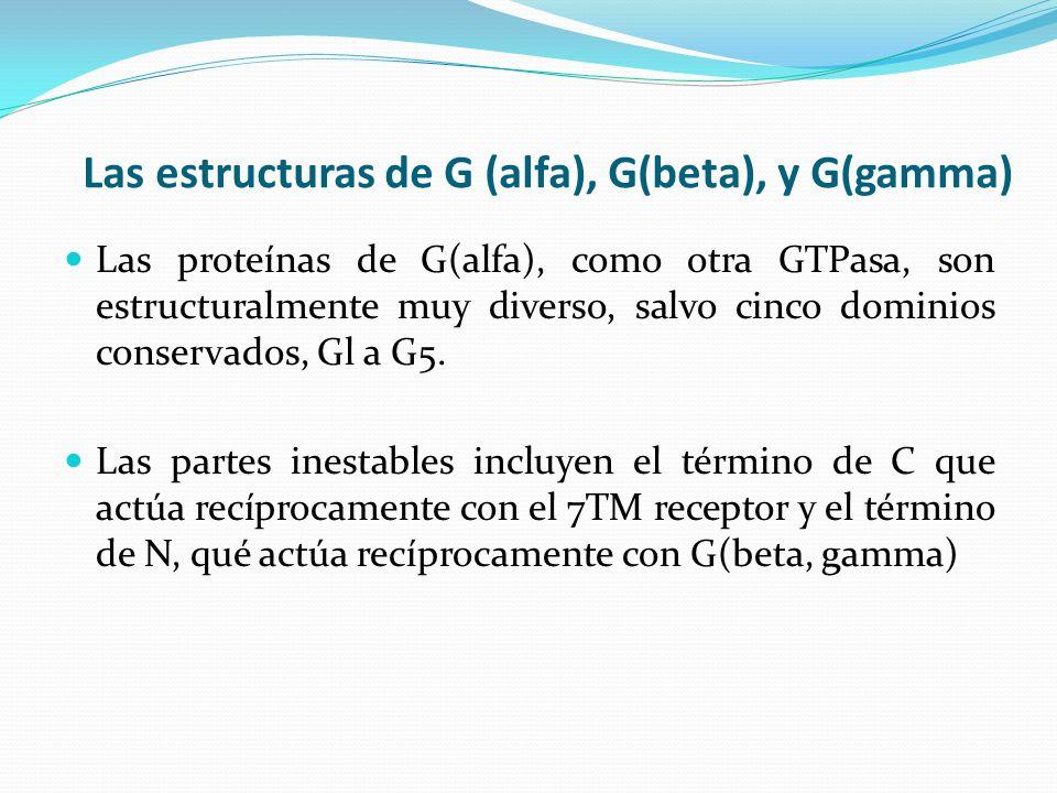 Las estructuras de G (alfa), G(beta), y G(gamma)