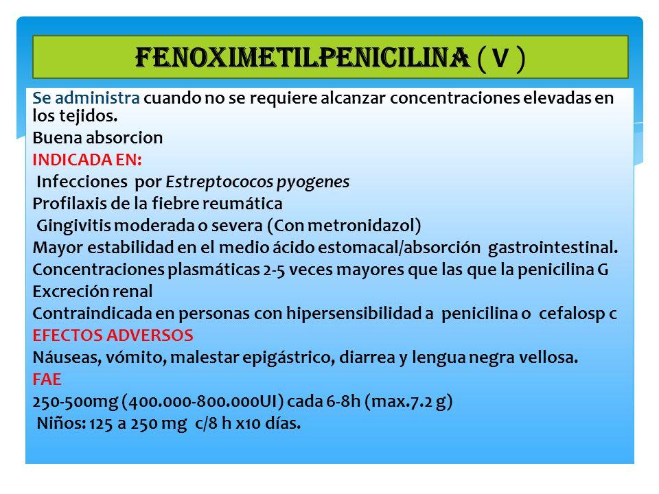 FENOXIMETILPENICILINA ( V )