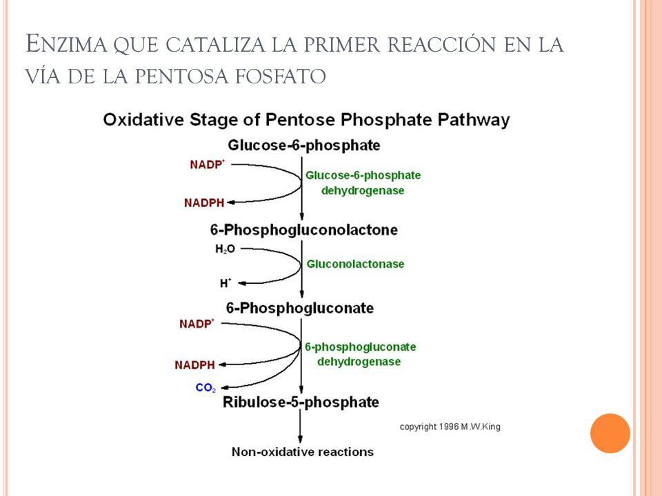 Enzima que cataliza la primer reacción en la vía de la pentosa fosfato