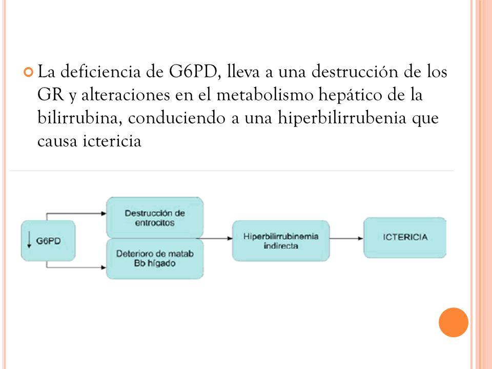 La deficiencia de G6PD, lleva a una destrucción de los GR y alteraciones en el metabolismo hepático de la bilirrubina, conduciendo a una hiperbilirrubenia que causa ictericia