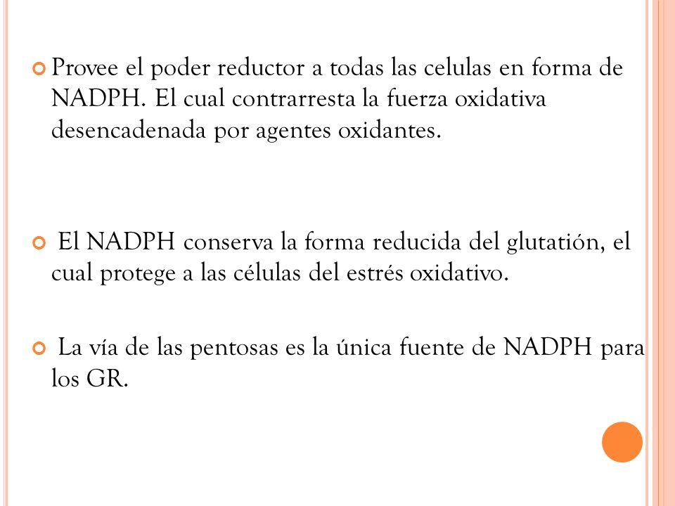 Provee el poder reductor a todas las celulas en forma de NADPH