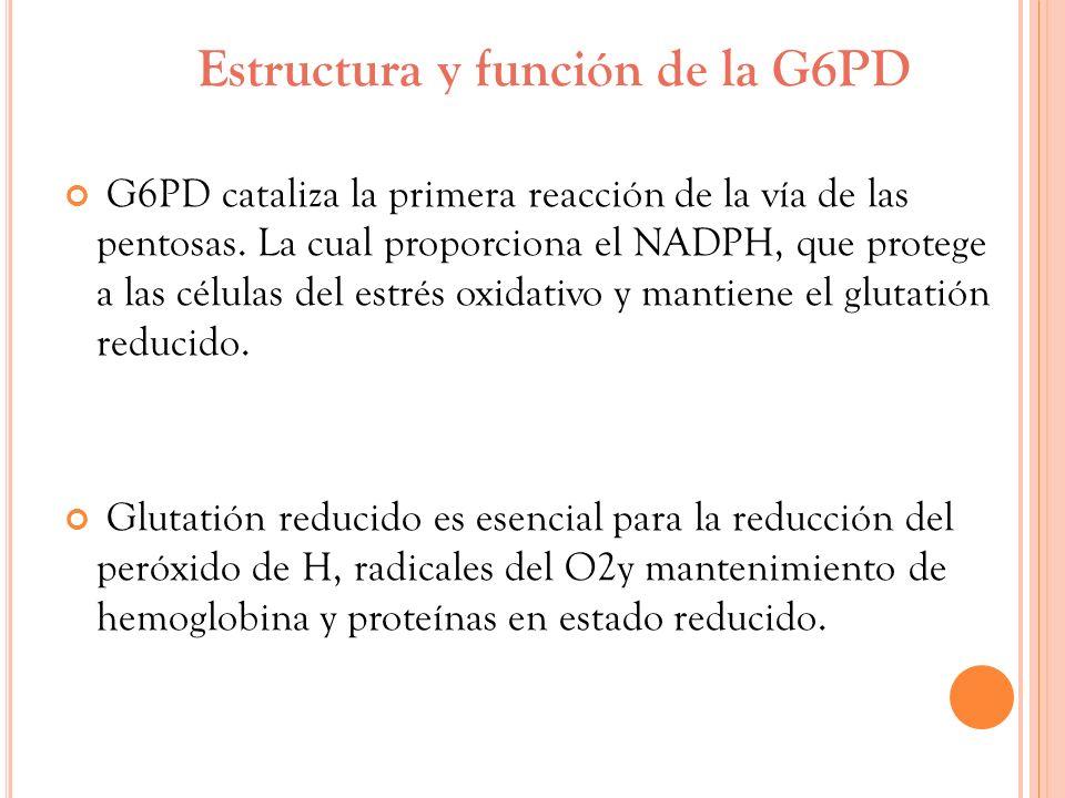 Estructura y función de la G6PD