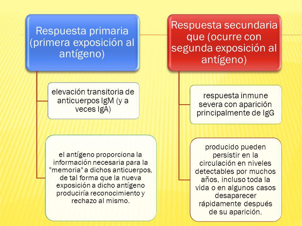 elevación transitoria de anticuerpos IgM (y a veces IgA)
