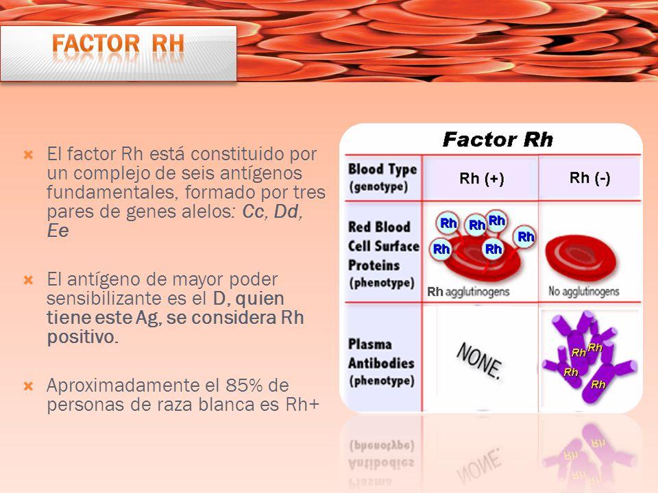 Factor Rh El factor Rh está constituido por un complejo de seis antígenos fundamentales, formado por tres pares de genes alelos: Cc, Dd, Ee.