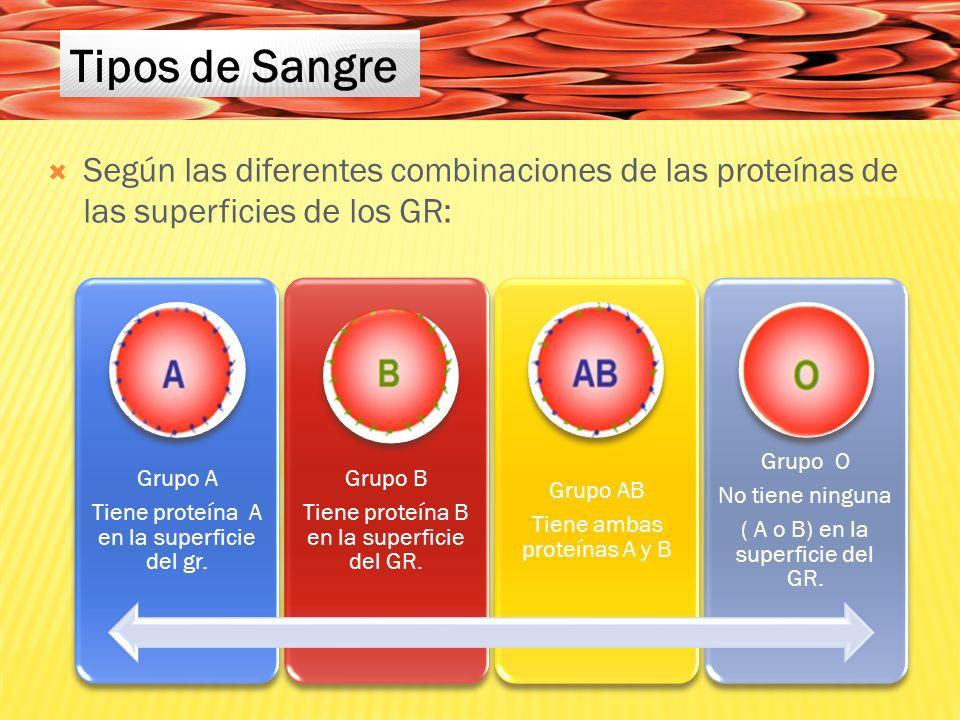 Tipos de Sangre Según las diferentes combinaciones de las proteínas de las superficies de los GR: Grupo A.
