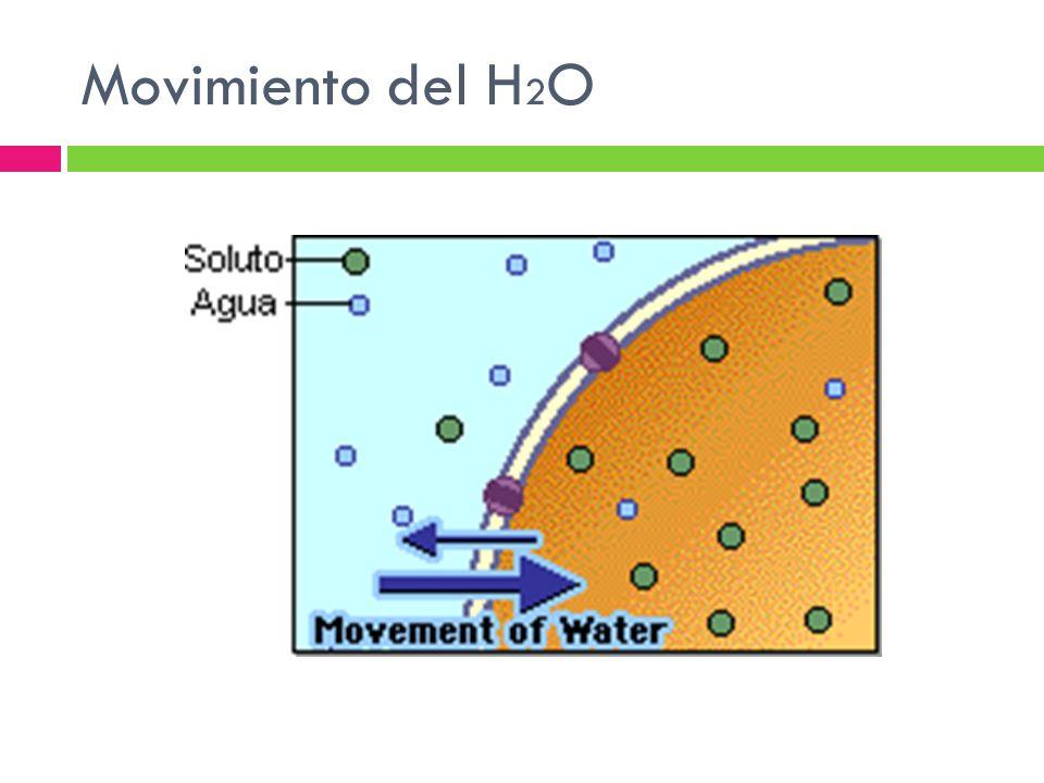 Movimiento del H2O