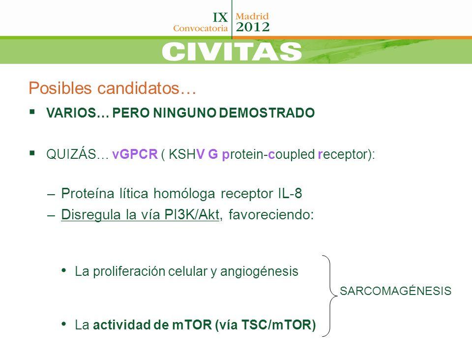 Posibles candidatos… Proteína lítica homóloga receptor IL-8