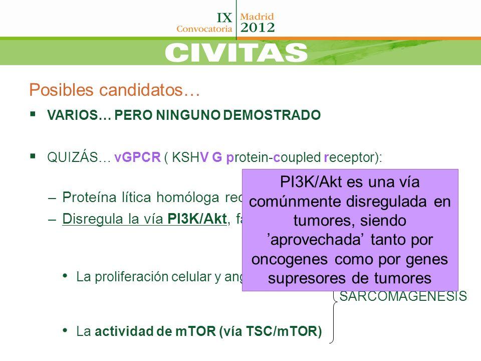 Posibles candidatos… VARIOS… PERO NINGUNO DEMOSTRADO. QUIZÁS… vGPCR ( KSHV G protein-coupled receptor):