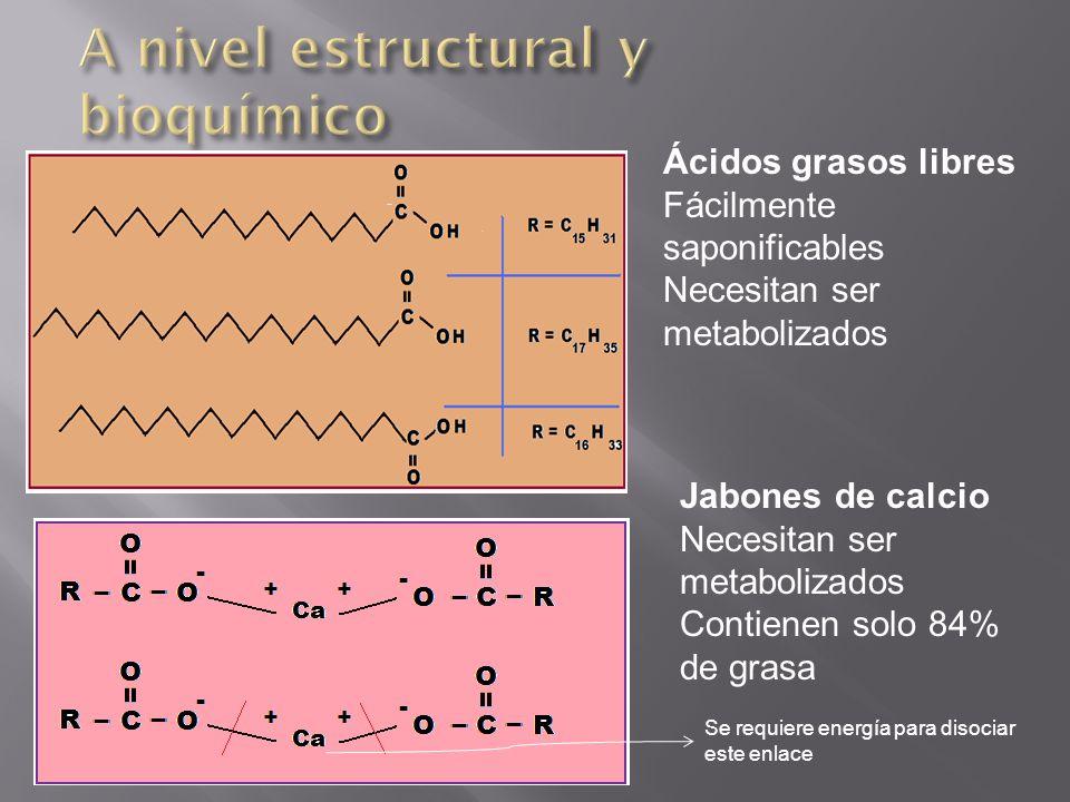 A nivel estructural y bioquímico