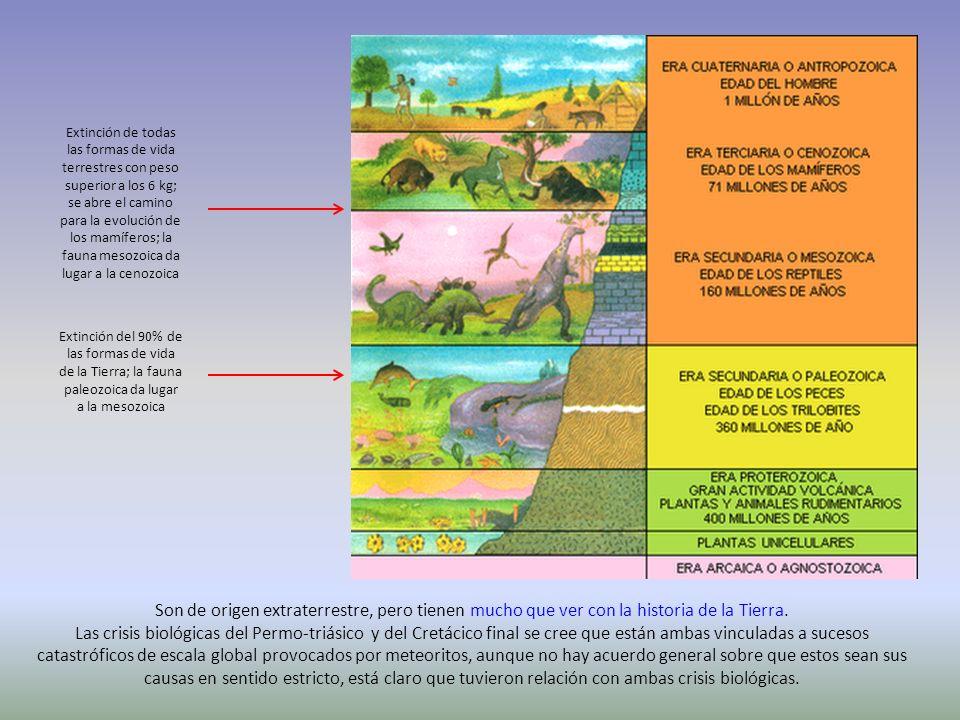 Extinción de todas las formas de vida terrestres con peso superior a los 6 kg; se abre el camino para la evolución de los mamíferos; la fauna mesozoica da lugar a la cenozoica