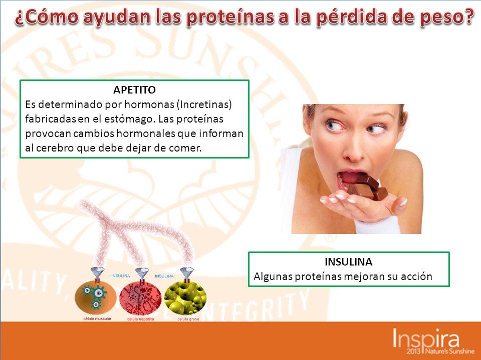 ¿Cómo ayudan las proteínas a la pérdida de peso