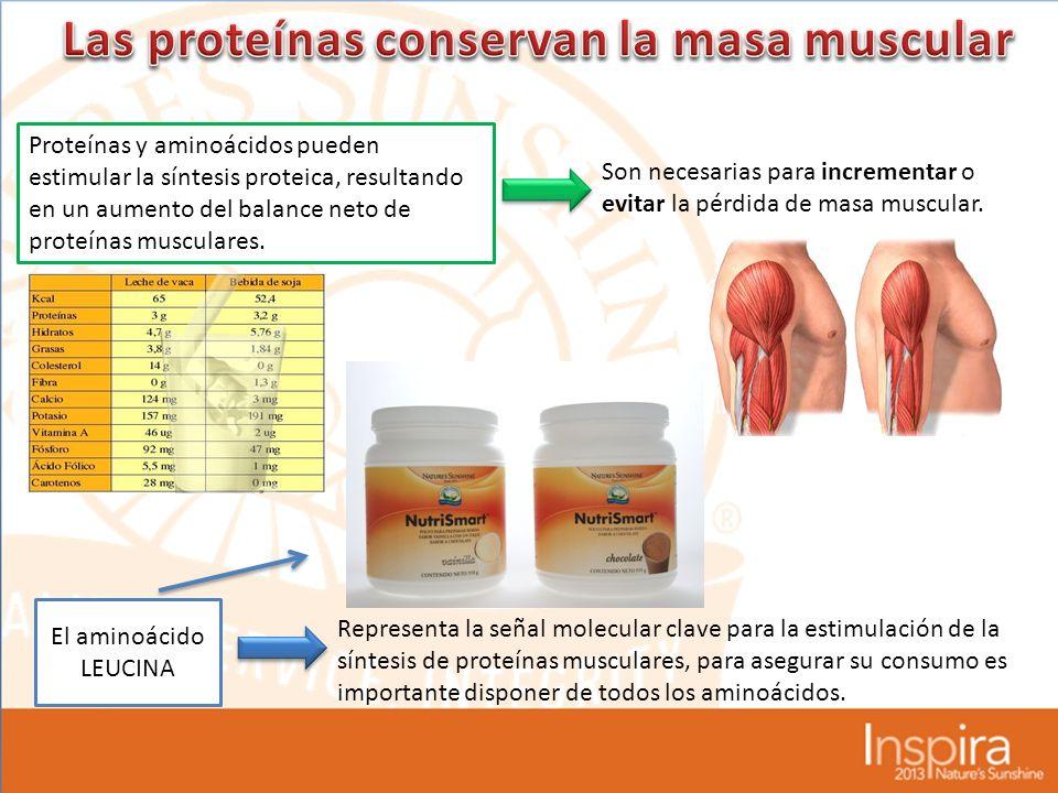 Las proteínas conservan la masa muscular