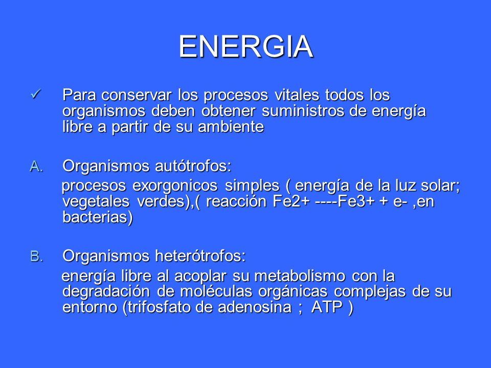 ENERGIA Para conservar los procesos vitales todos los organismos deben obtener suministros de energía libre a partir de su ambiente.
