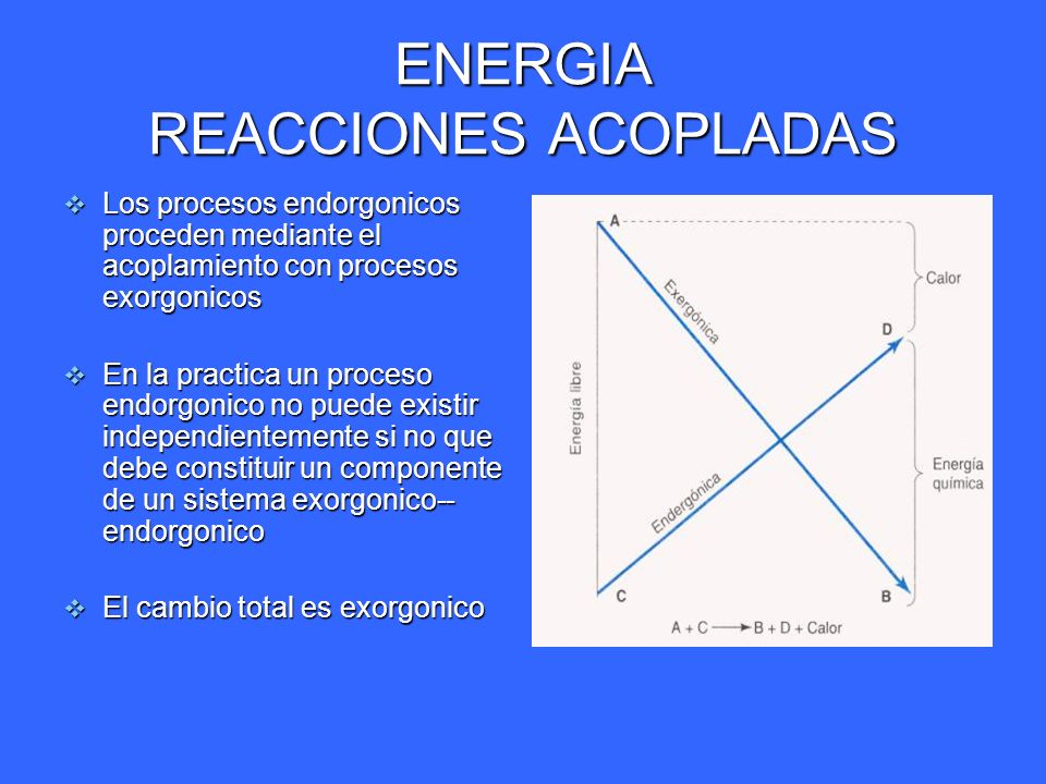 ENERGIA REACCIONES ACOPLADAS