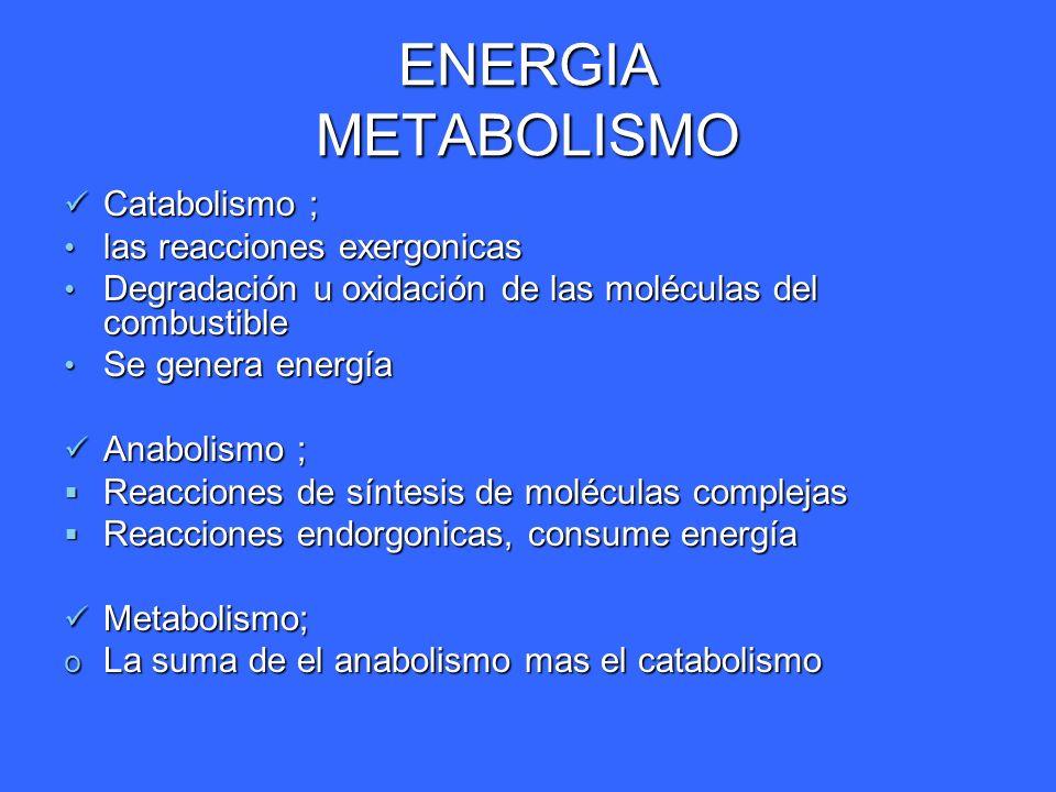 ENERGIA METABOLISMO Catabolismo ; las reacciones exergonicas