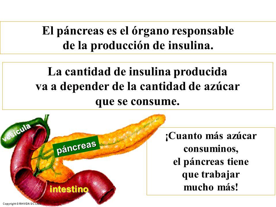 El páncreas es el órgano responsable de la producción de insulina.