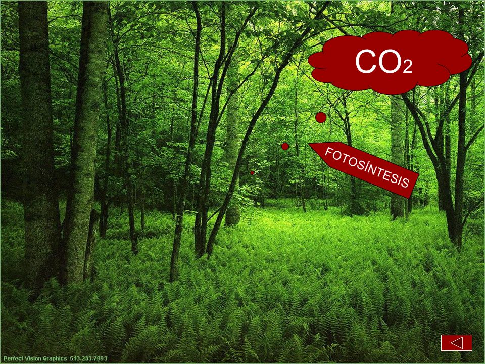 CO2 FOTOSÍNTESIS Bosque puta madre con nubes