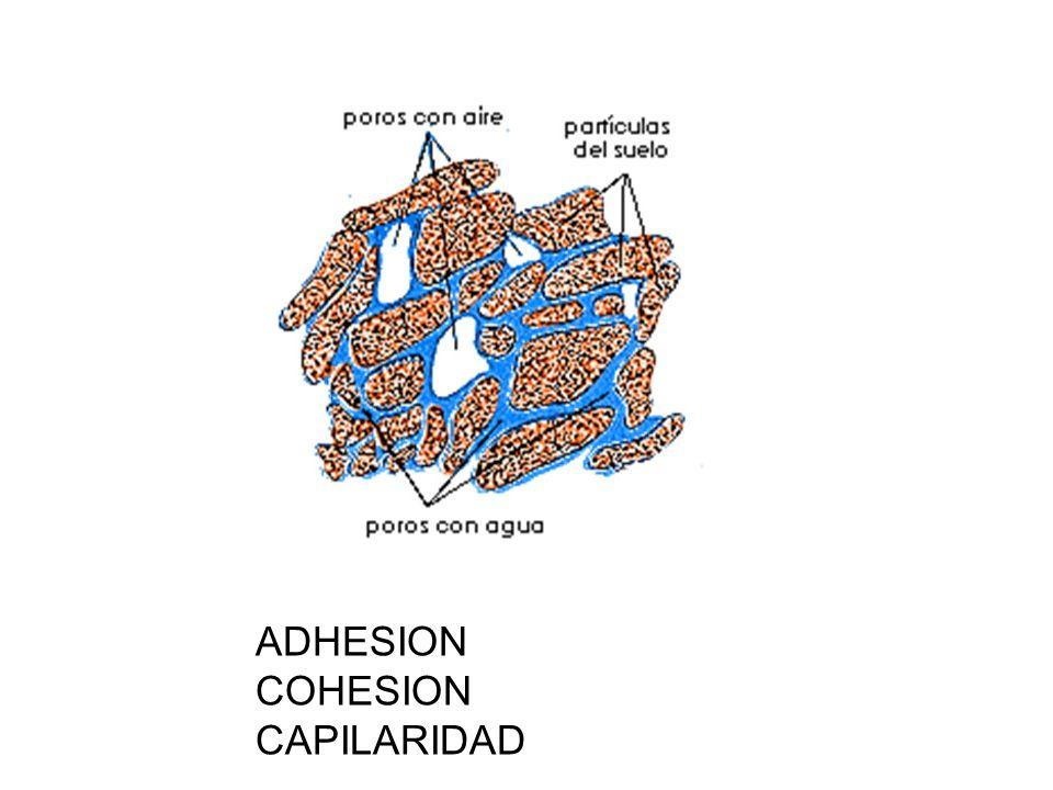 ADHESION COHESION CAPILARIDAD
