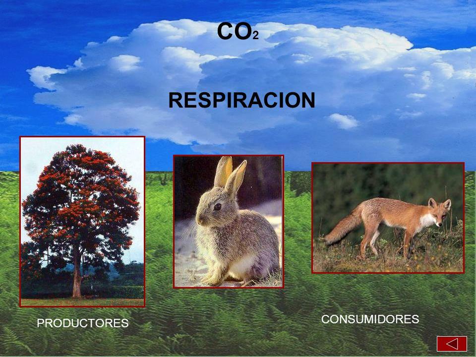 CO2 RESPIRACION CONSUMIDORES PRODUCTORES