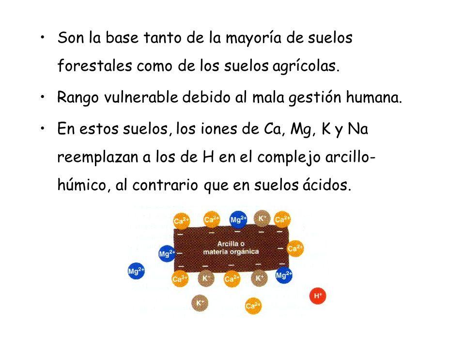 Son la base tanto de la mayoría de suelos forestales como de los suelos agrícolas.