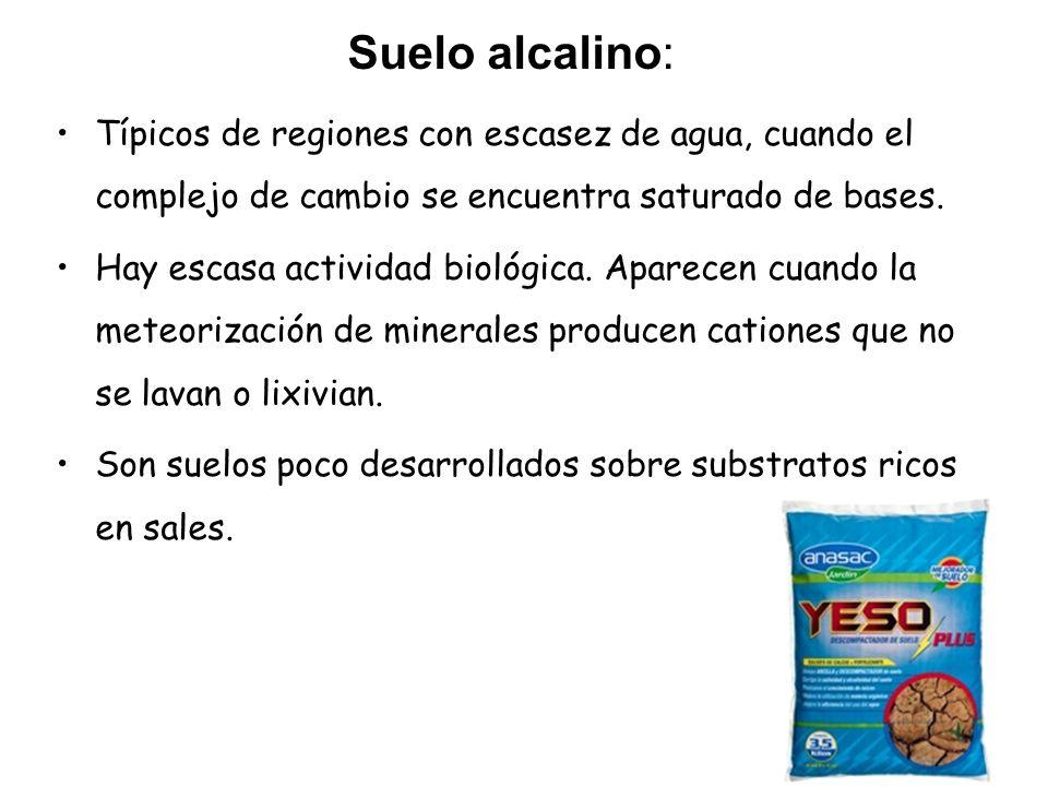 Suelo alcalino: Típicos de regiones con escasez de agua, cuando el complejo de cambio se encuentra saturado de bases.