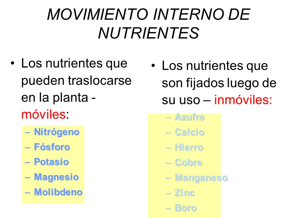 MOVIMIENTO INTERNO DE NUTRIENTES