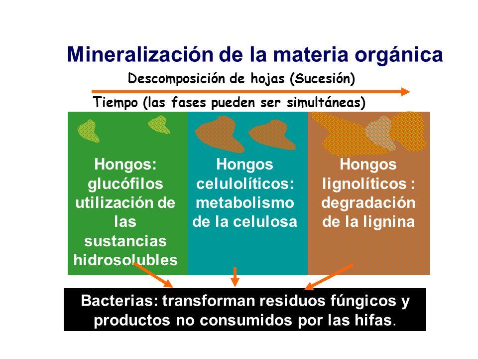 Mineralización de la materia orgánica