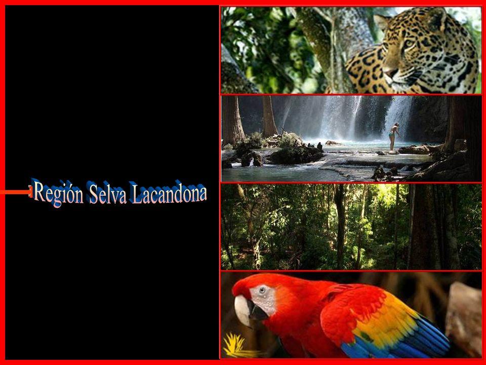 Región Selva Lacandona