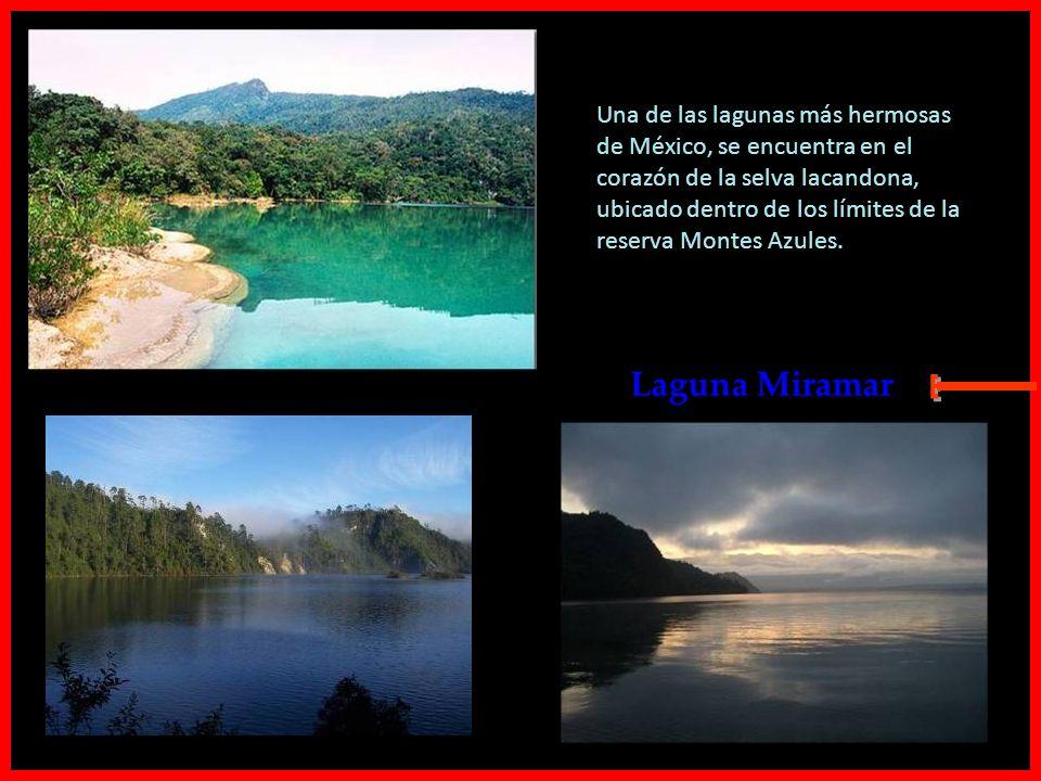 Una de las lagunas más hermosas de México, se encuentra en el corazón de la selva lacandona, ubicado dentro de los límites de la reserva Montes Azules.