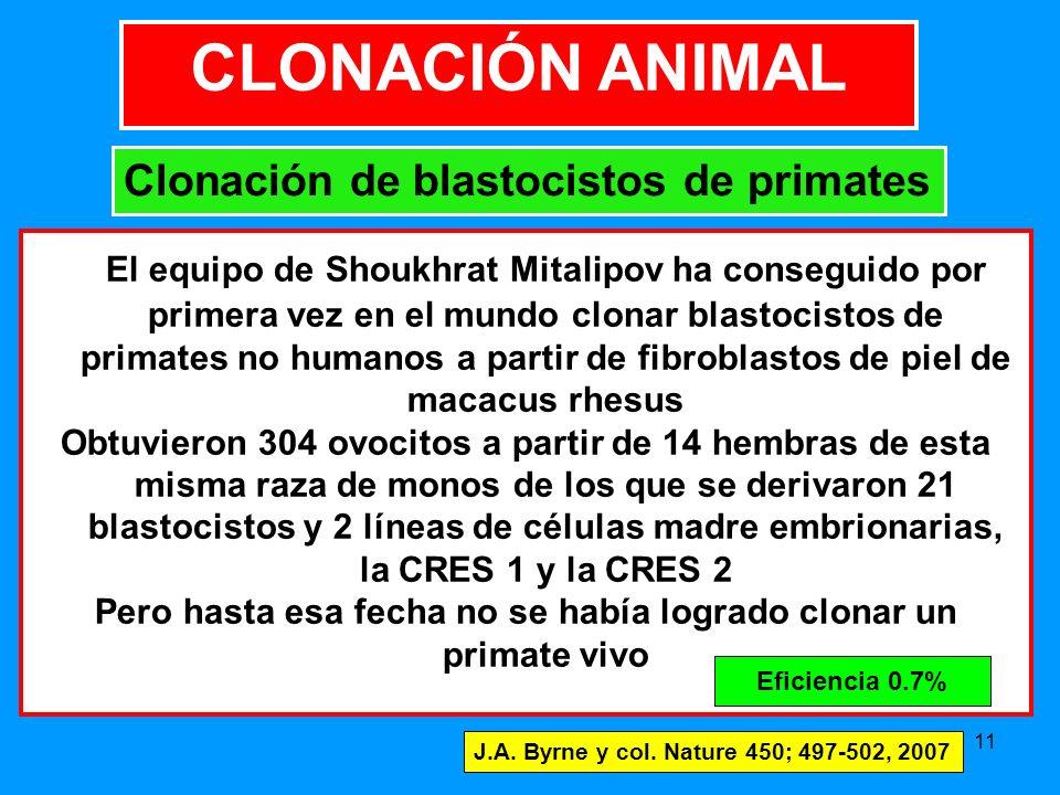 Pero hasta esa fecha no se había logrado clonar un primate vivo