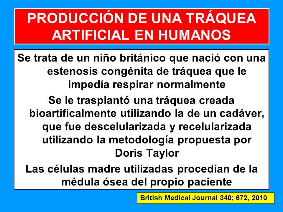 PRODUCCIÓN DE UNA TRÁQUEA ARTIFICIAL EN HUMANOS