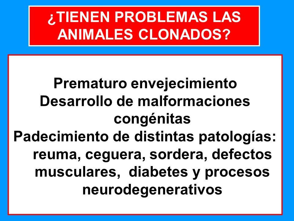 ¿TIENEN PROBLEMAS LAS ANIMALES CLONADOS