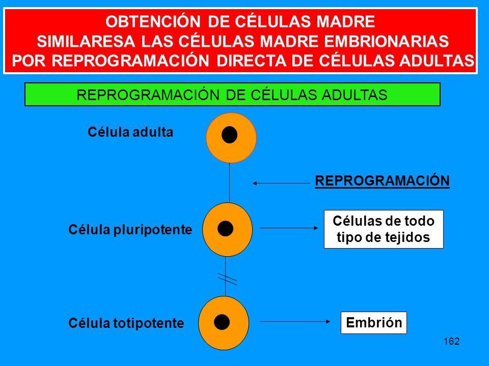 OBTENCIÓN DE CÉLULAS MADRE SIMILARESA LAS CÉLULAS MADRE EMBRIONARIAS