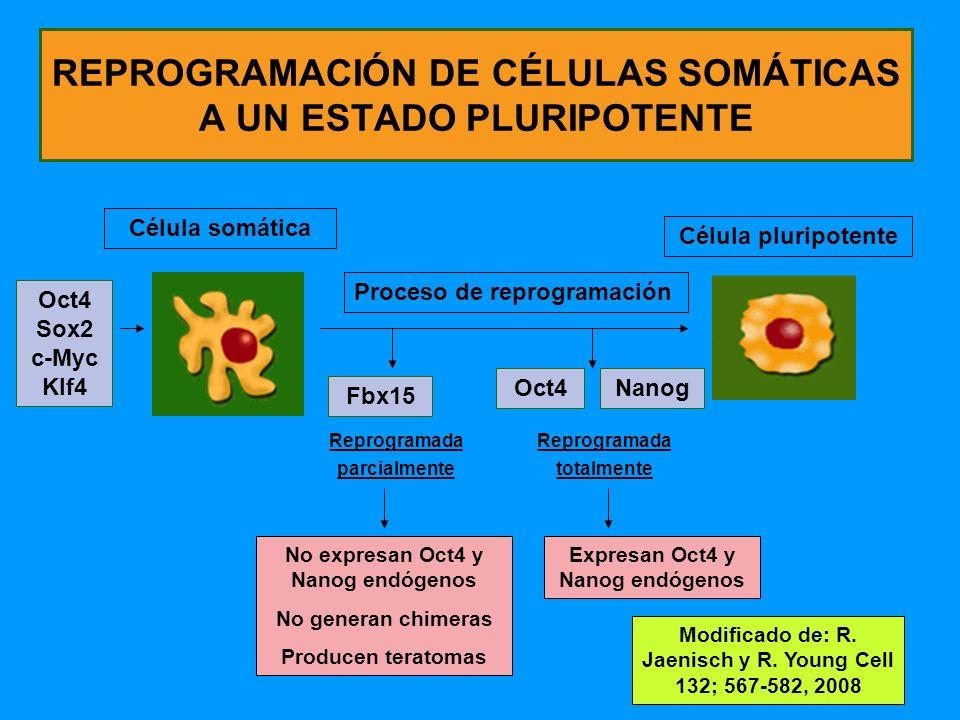 REPROGRAMACIÓN DE CÉLULAS SOMÁTICAS A UN ESTADO PLURIPOTENTE