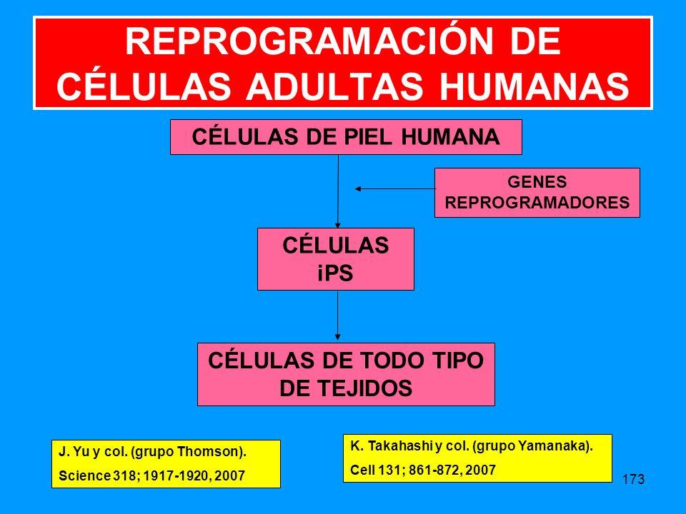 REPROGRAMACIÓN DE CÉLULAS ADULTAS HUMANAS