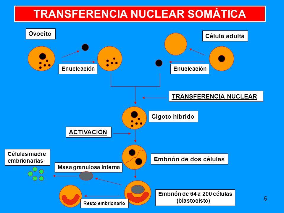 TRANSFERENCIA NUCLEAR SOMÁTICA