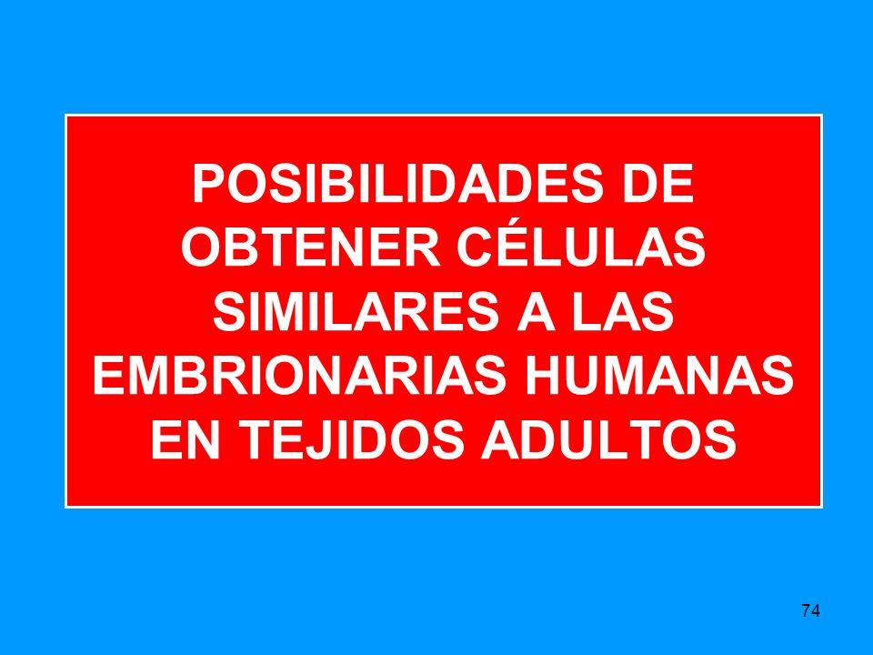 POSIBILIDADES DE OBTENER CÉLULAS SIMILARES A LAS EMBRIONARIAS HUMANAS EN TEJIDOS ADULTOS