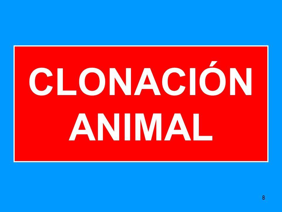 CLONACIÓN ANIMAL