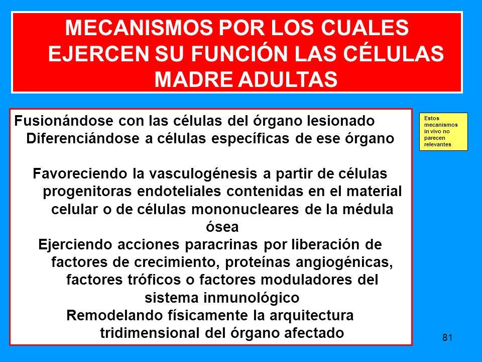 MECANISMOS POR LOS CUALES EJERCEN SU FUNCIÓN LAS CÉLULAS MADRE ADULTAS
