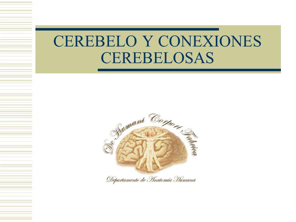 CEREBELO Y CONEXIONES CEREBELOSAS