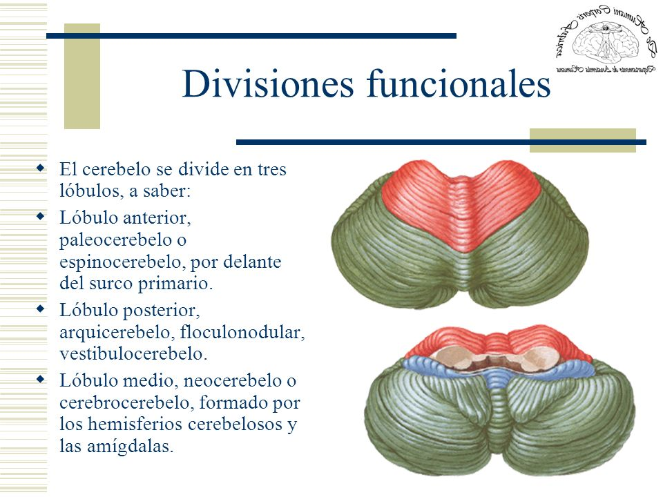 Divisiones funcionales