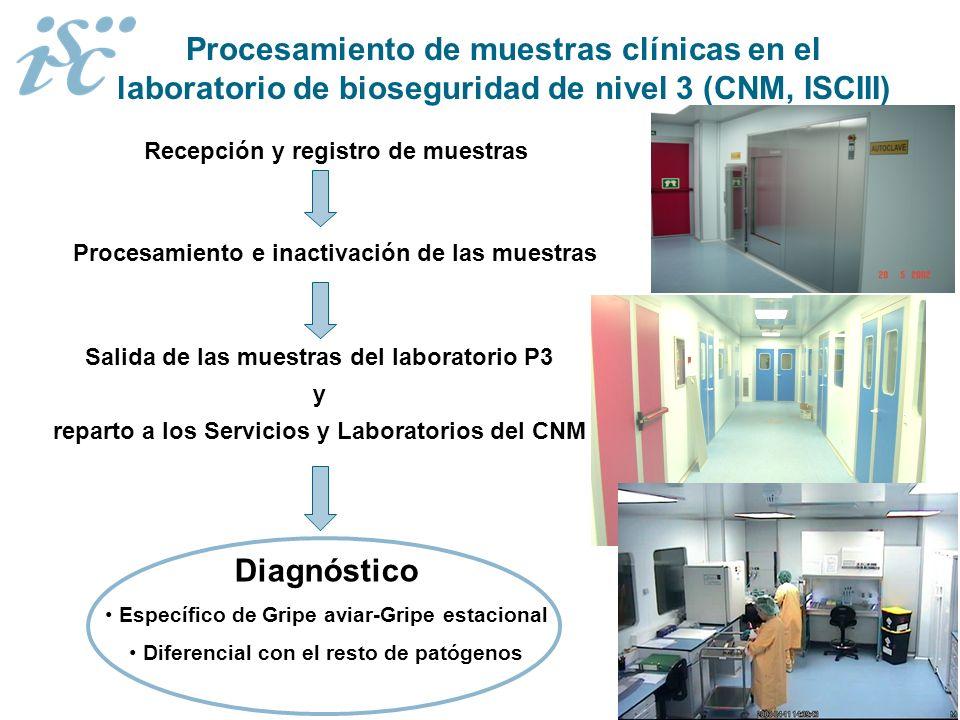 Procesamiento de muestras clínicas en el laboratorio de bioseguridad de nivel 3 (CNM, ISCIII)