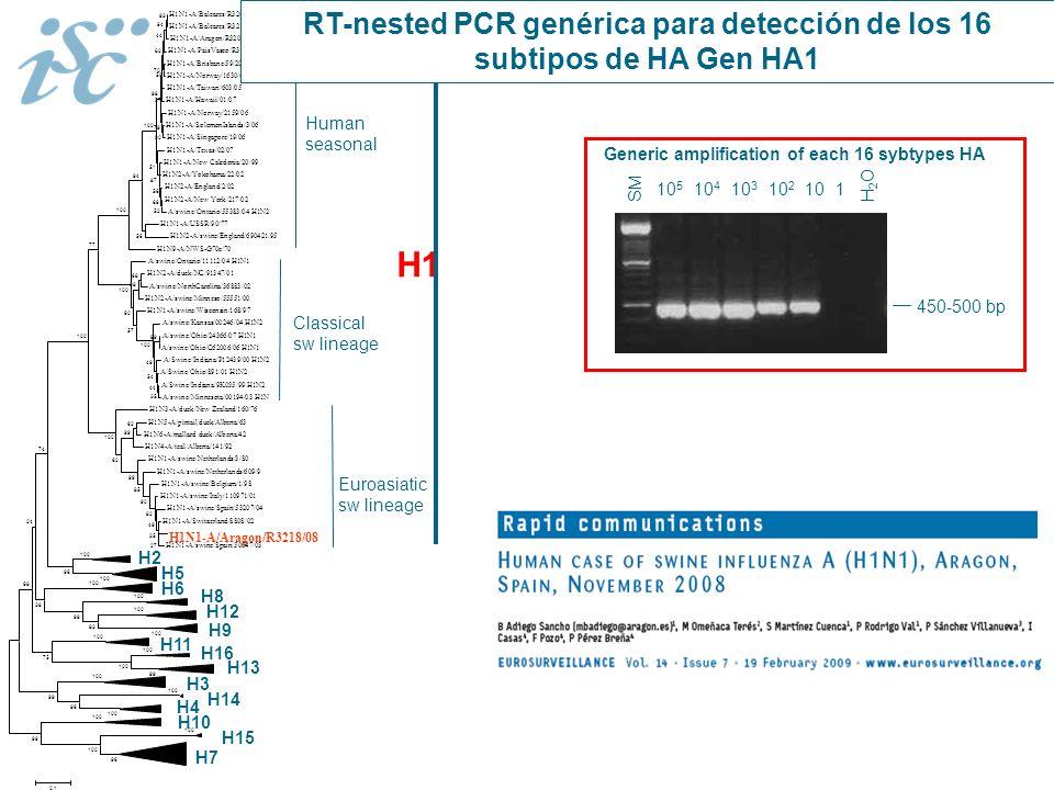 RT-nested PCR genérica para detección de los 16 subtipos de HA Gen HA1
