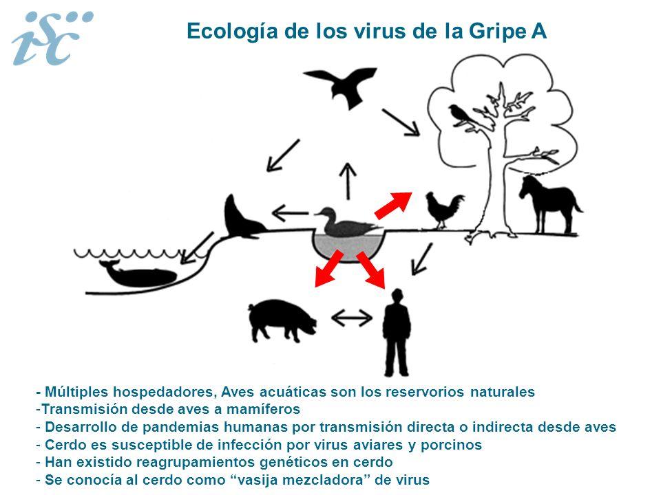 Ecología de los virus de la Gripe A