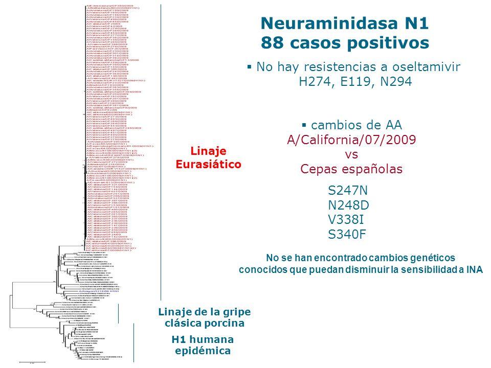 Neuraminidasa N1 88 casos positivos