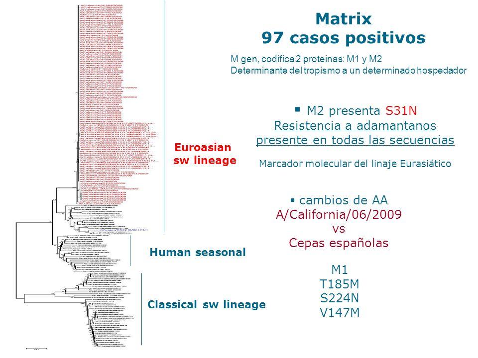 Matrix 97 casos positivos