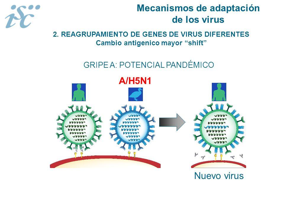 Mecanismos de adaptación de los virus