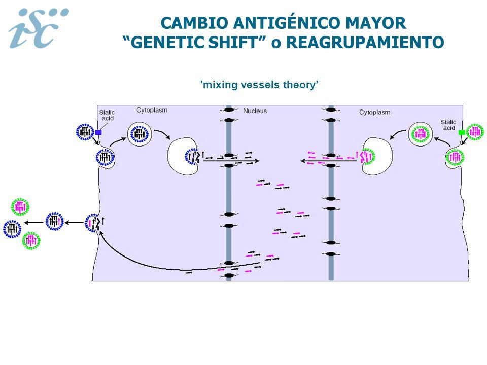 CAMBIO ANTIGÉNICO MAYOR GENETIC SHIFT o REAGRUPAMIENTO
