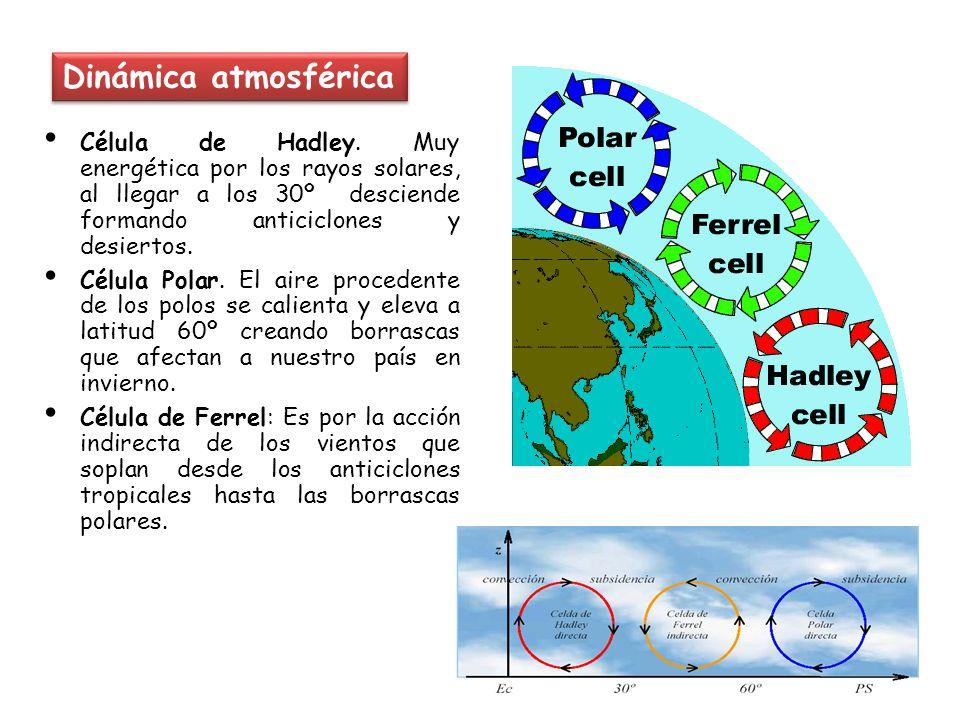 Dinámica atmosférica Célula de Hadley. Muy energética por los rayos solares, al llegar a los 30º desciende formando anticiclones y desiertos.