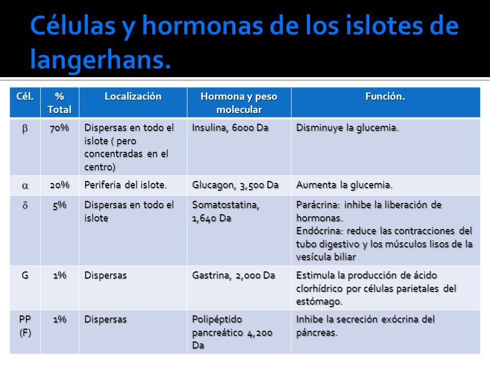 Células y hormonas de los islotes de langerhans.